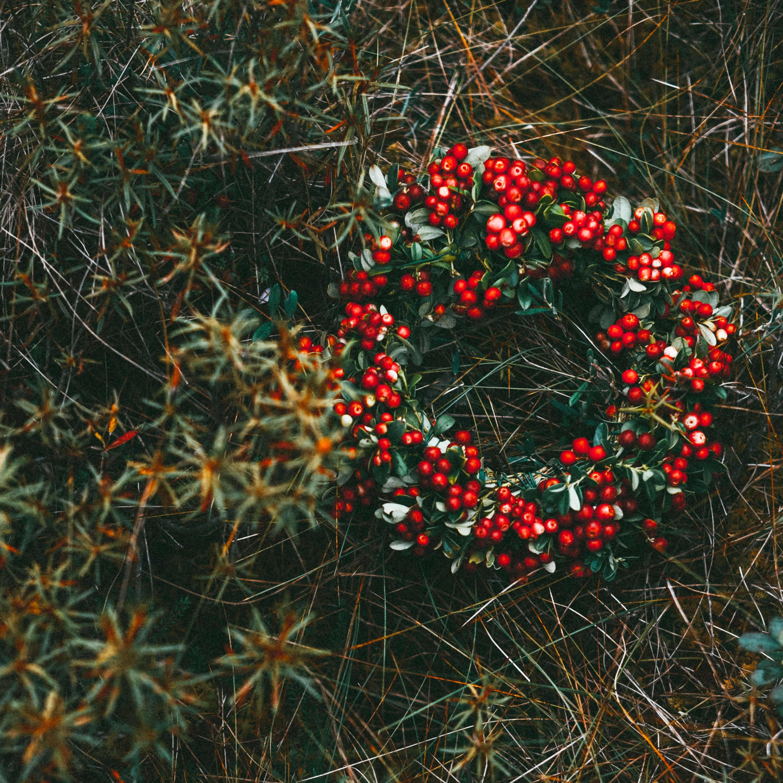 Kerst bij Mens en Tuin