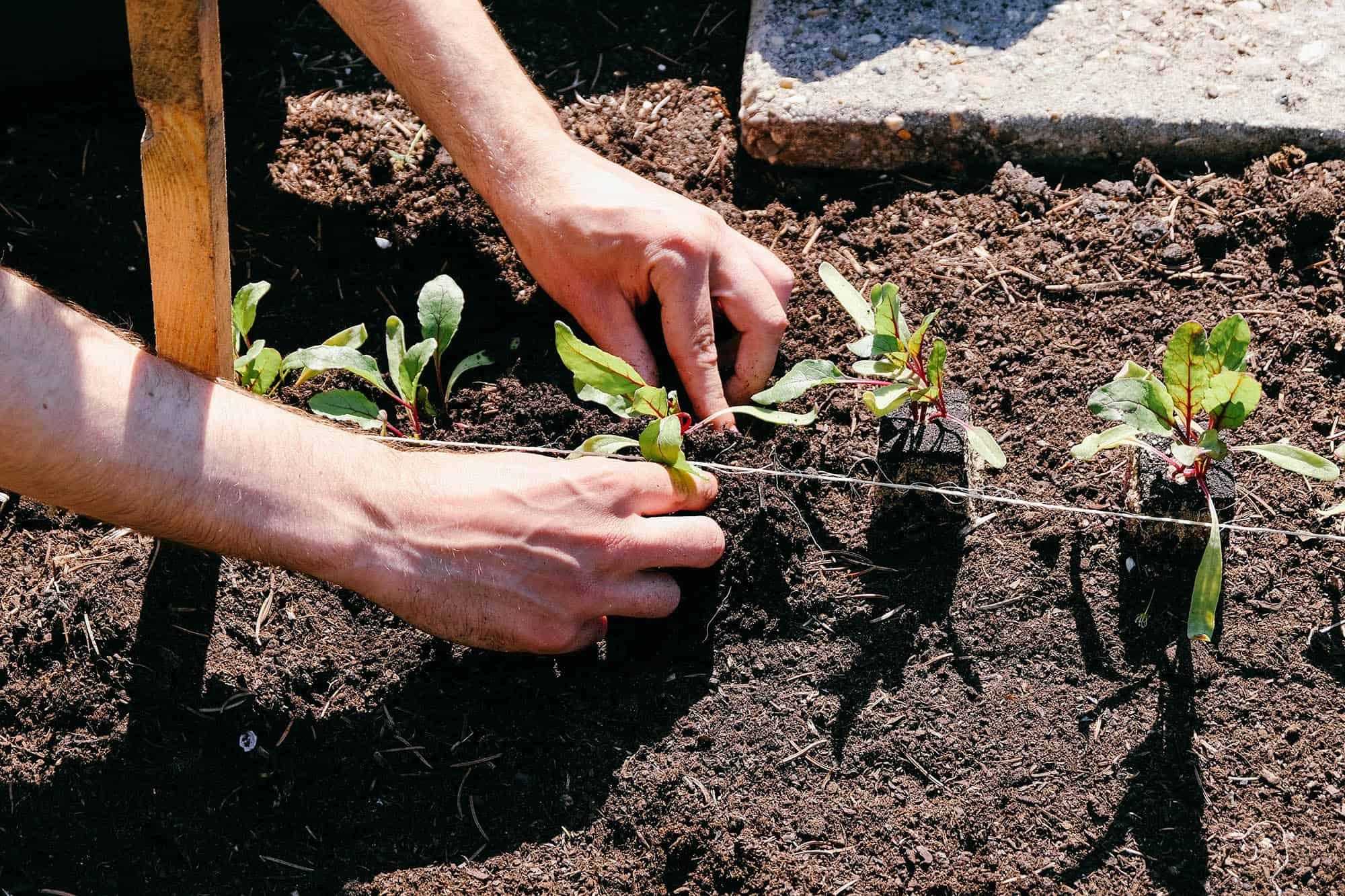 Park Als Tuin : In het park stichting mens en tuin