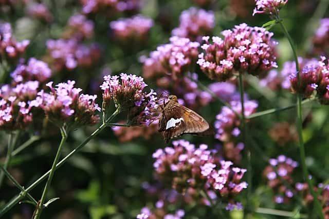 Planten in het bijenpakket zomer en najaar